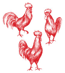 Red Roosters Sketch