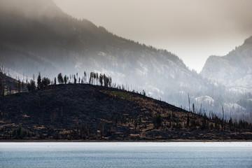 Wildfire aftermath Jackson Lake Grand Teton