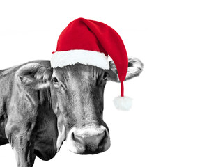 Black and white fun cow on white background with a Santa hat