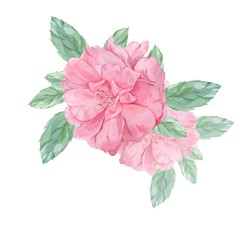 Wild rose. Watercolor illustration. Handmade drawing. Isolated on white. Element to design cards, posters.
