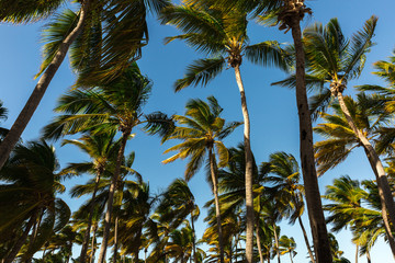 Palm trees in tropical land