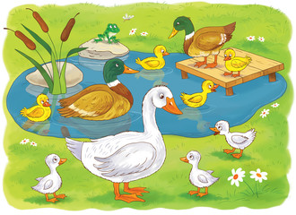 At the farm. Domestic animals. Cute duck and ducklings in the pond. Mother goose with her babies. Illustration for children. Coloring book. Coloring page. Funny cartoon characters.