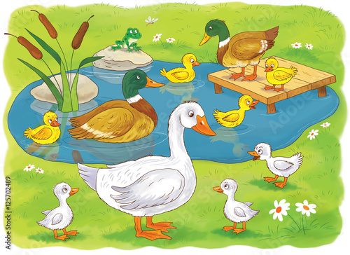 At The Farm Domestic Animals Cute Duck And Ducklings In Pond Mother