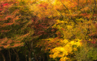 Beautiful Colorful Autumn Leaves for background