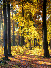 Beautiful forest in autumn