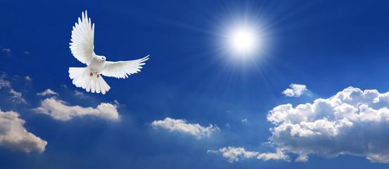 Frieden Taube mit Wolken und Sonne