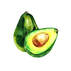 Watercolor hand drawn avocado. isolated on white