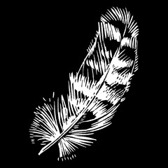 Hand-drawn vector feather, ink handpicked