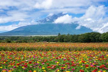 富士山と花畑(日本・静岡・山形)