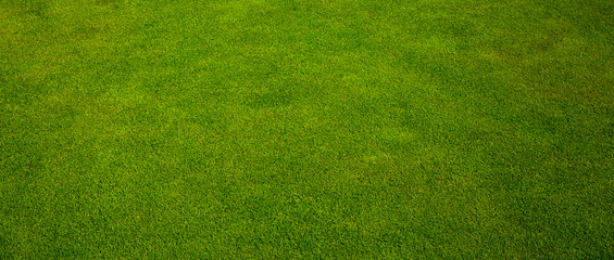 Green grass texture from a golf course