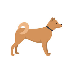 Akita Inu - dog asian breed on white background. Vector illustration