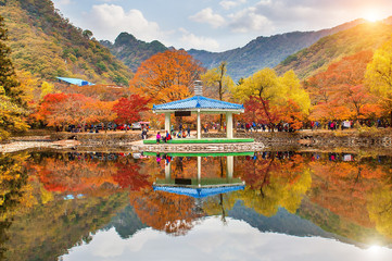 Wall Mural - Naejangsan National Park in Autumn,South Korea