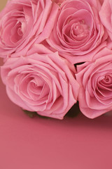 pink roses on a pink background