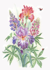 Bouquet from irises and lupines and a ladybug. Water color drawing.