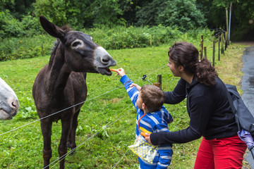 Family feeding donkey in Germany.