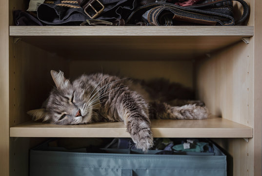 Chewie the cat resting on a wardrobe shelf 1