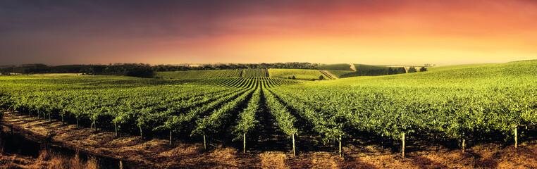 Garden Poster Vineyard Stunning Sunset Vines