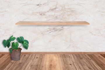 plant tree in a pot at room, empty interior with marble wall sto