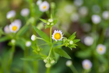 Wild grass flower close up.