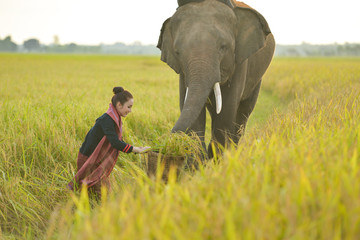 Beautiful Thai local woman working happy wiht elephant,thailand