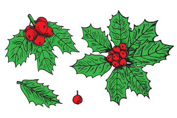 Holly leaves and berries set. Hand drawn doodle vector, pop art, comic style illustration
