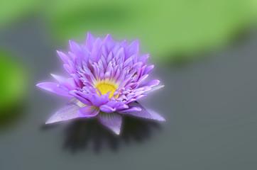 Lotus, wallapersbackground