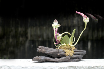 still life with orchid on wood in night time with dak background