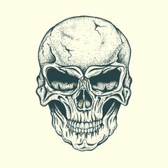 Skull of human
