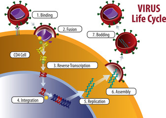 Vector illustration of Virus Life cycle