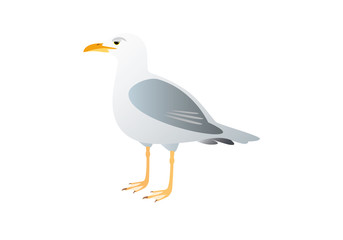 Gull on a white background. Vector illustration seagull