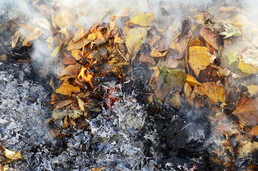 smoke from burning leaves  ,they were gathered by cleaning