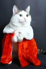 funny cat in christmas new year coat