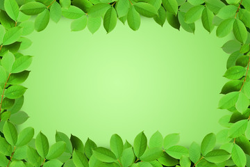 Green leaves frame isolated on green background