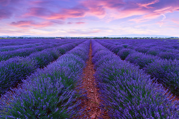 Photo sur Plexiglas Prune Lavender field summer sunset landscape