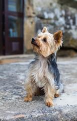 little dog in the village