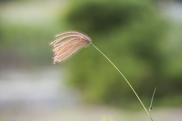single flower grass with spider and little bug natural blurred background