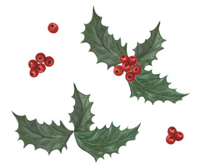 Watercolor painting Holly berry leaves Christmas decoration isolated on white background