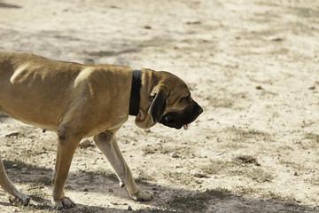 Sad lonely dog
