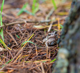 Frog in nature