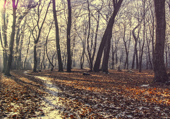 Winter morning in forest