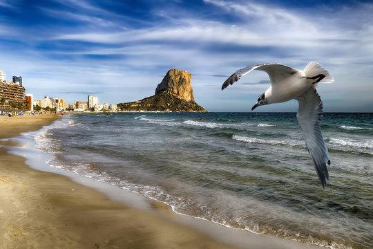 Strand von Calpe mit Blick auf den  Peñon de Ifach und Möwe im Vordergrund