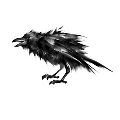 sitting crow art isolated