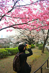 Young man taking photo of pink cherry blossoms from under the tr