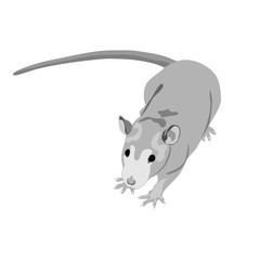 Grayscale rat isolated on the white (transparent) background.  Vector illustration eps