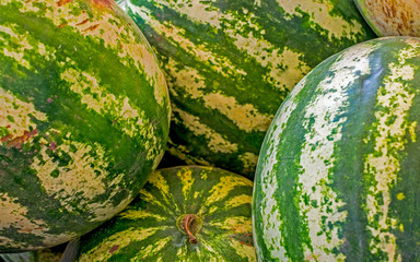 Ripe big water-melons with a green striped skin closeup view