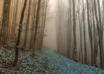 Rythem and blues in foggy forest