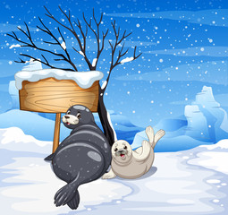 Two seals on snowy day