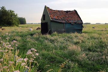 Foto auf Gartenposter Schaf Vervallen huisje in de wei