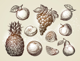 Collection fruits sketch. Hand-drawn elements such as apple, pineapple, pear, grapes, orange, lemon. Vector illustration