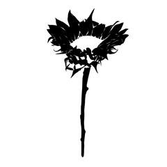 sunflower stencil isolated